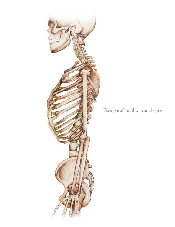 What Is Neutral Spine Alignment And Why Is It So Important